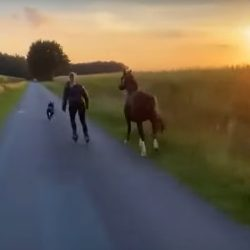 A girl, her horse, her dog & the sunset