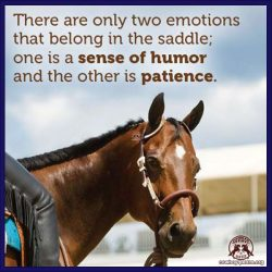 There are only two emotions that belong in the saddle; one is a sense of humor and the other is patience.